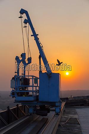 india delhi nueva delhi grua pajaro