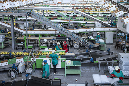 people working in apple factory