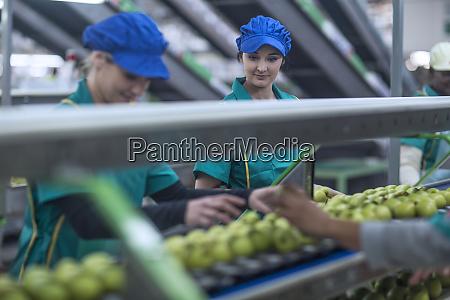 two women working in apple factory