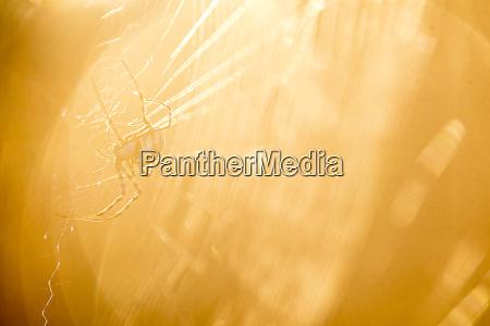sudafrica aranya en la tela luz
