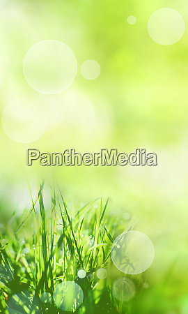 sunny green spring background