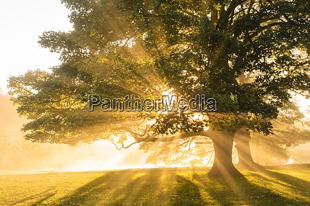 rays of sun shine through autumn