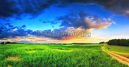 spring rural scene green fields after