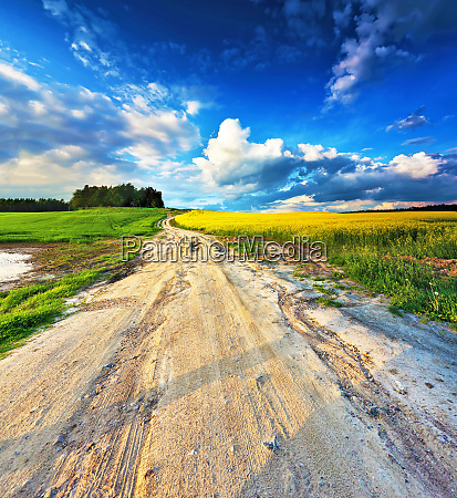 dirt road into yellow colza and
