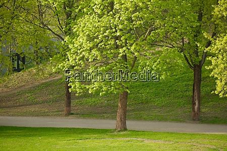 arbolado verde en un parque