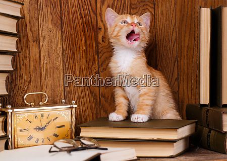 the cat stands on the book