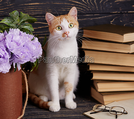 cat on the shelf with books