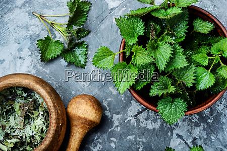 ortigas a picadura hierba medica urtica