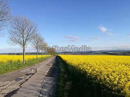 paisaje floreciente en sajonia alemania