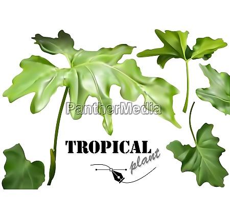 conjunto, de, hojas, tropicales, verdes - 27002100