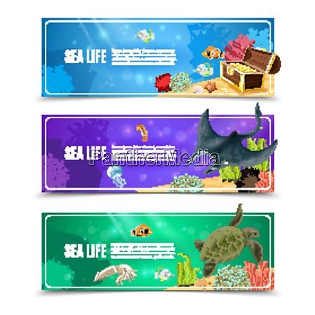 variantes de la vida marina submarina