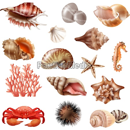 conjunto realista de diferentes hermosas conchas