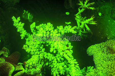 underwater, sea, life, near, airport, and - 27328486