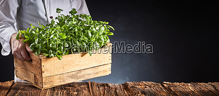 chef or cook carrying fresh potted