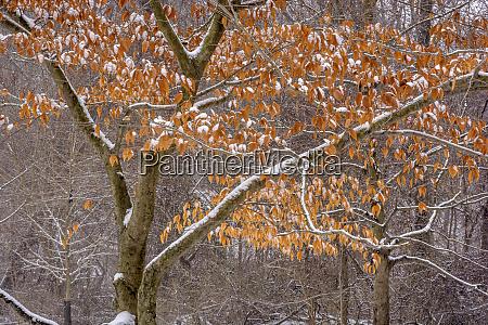 estados unidos pensilvania filadelfia nieve en