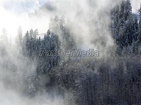 los arboles en la niebla con