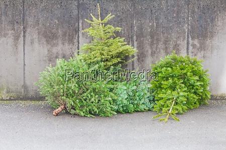 los arboles de navidad verdes tradicionales