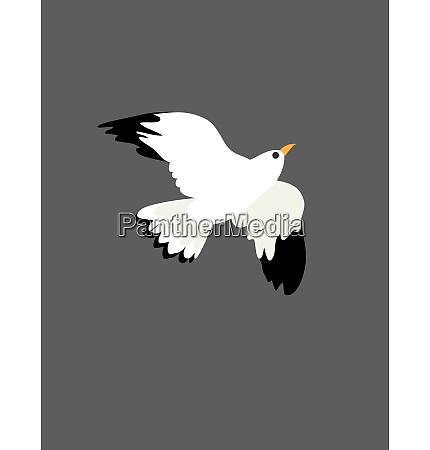retrato del ave gaviota en vuelo