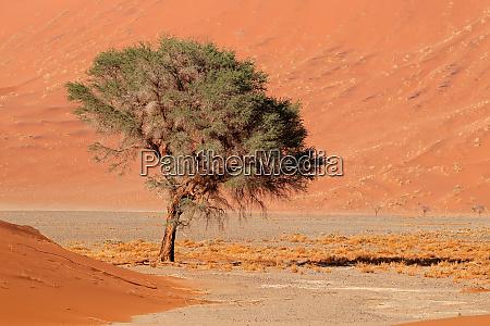 duna de arena y arbol