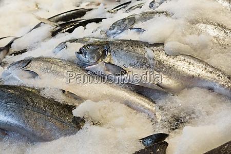 wa seattle pike place market salmon