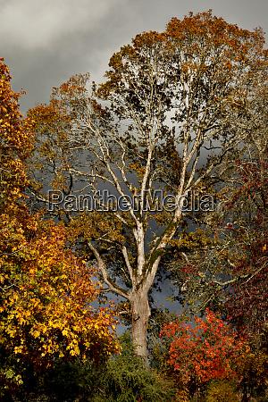 usa oregon portland oak and maple