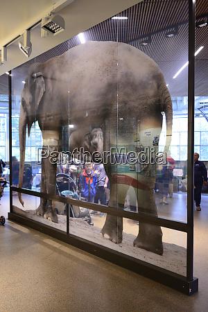 usa oregon portland elephant photos in