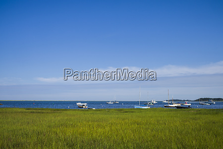 usa massachusetts cape cod eastham marsh