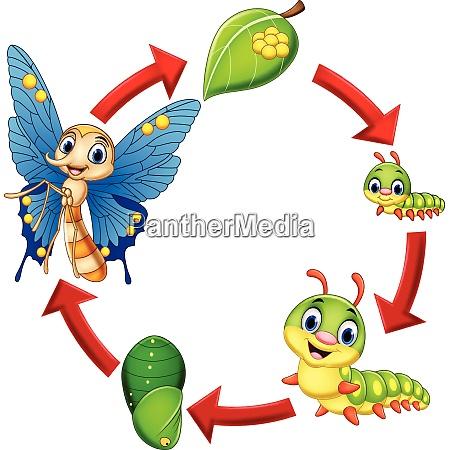 ilustracion del ciclo de vida de