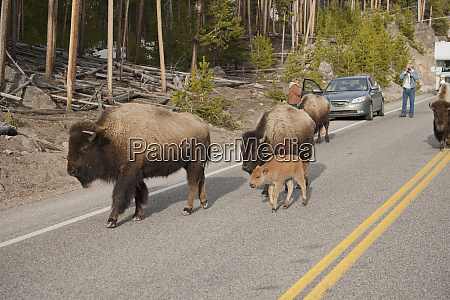 parque nacional yellowstone wyoming estados unidos