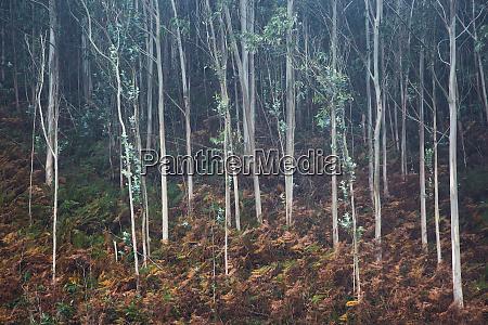 hojas que crecen en arboles de