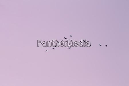 ID de imagen 28234513
