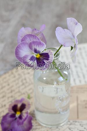 naturaleza muerta de flores nostalgicas con
