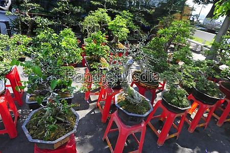 la, cultura, bonsái, en, vietnam - 28846626