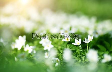 madera con flores de primavera
