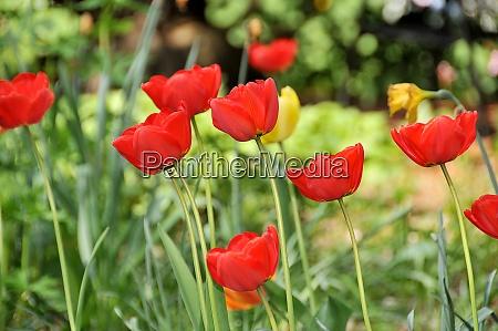 pradera de flores de verano