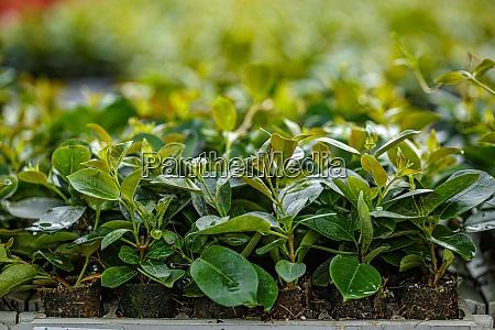 planta en casa verde