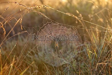 aranya en la telaranya de aranya