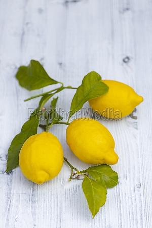 bodegon con limones con hojas de