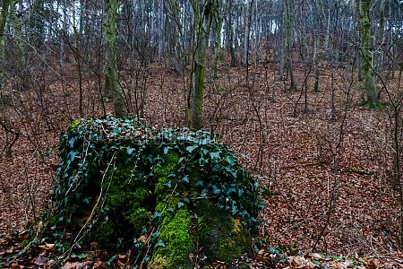 tronco de arbol viejo con musgo
