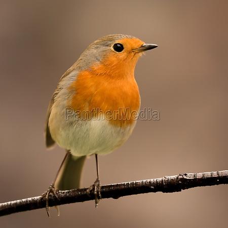 bonito, pájaro, con, un, bonito, plumaje - 29783839
