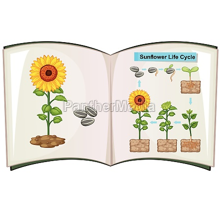 libro que muestra el diagrama del