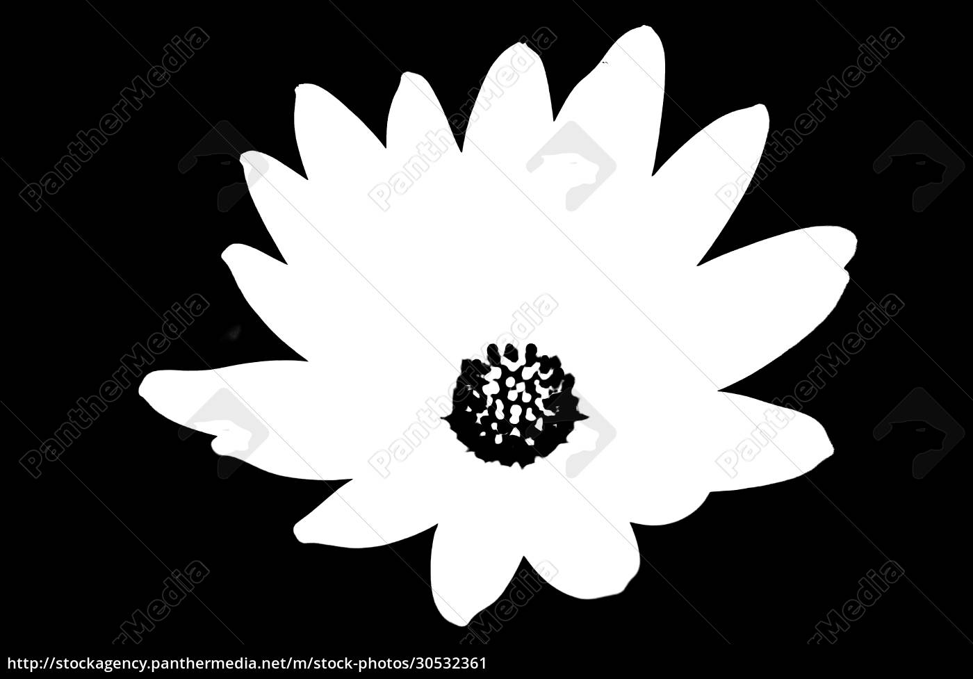 black, and, white, floral, pattern - 30532361