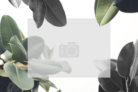 ID de imagen B167654308