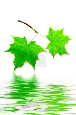 verde, Color, blanco, Contexto, Vibrante, Aislado - B5079346