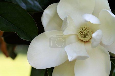 ID de imagen B7367077